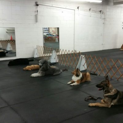 Products Archive Bloomington Obedience Training Club